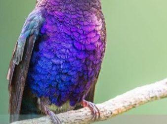 aves de ensueno y totems animales