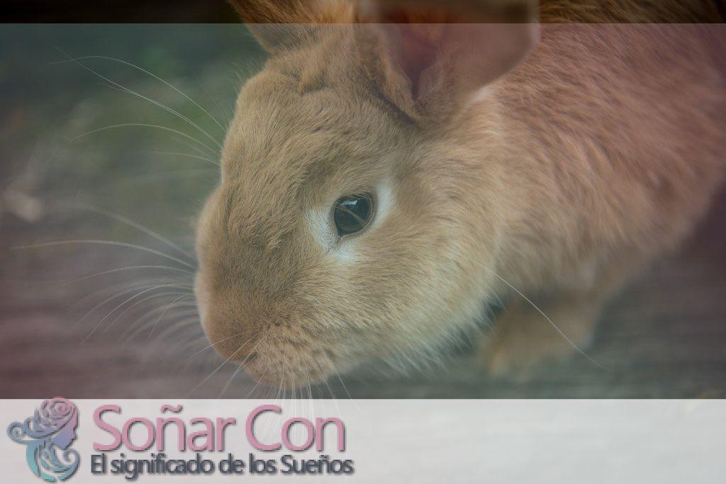 Soñar con conejos y su Significado