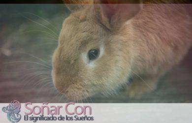 significado de Conejo