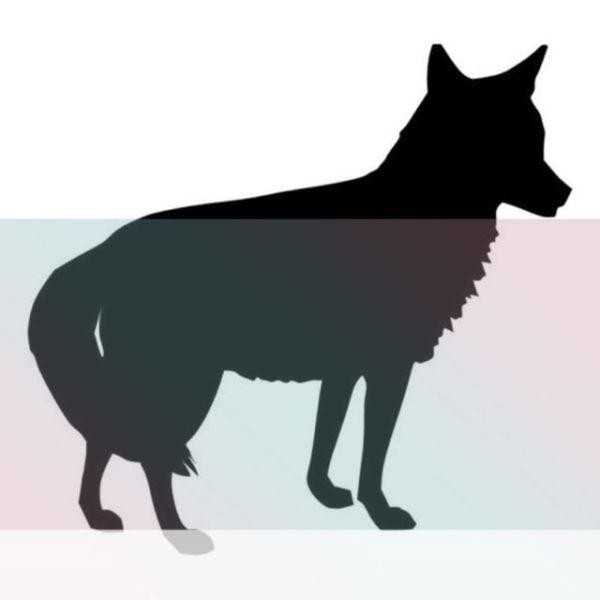 coyote significado un simbolo de la sabiduria
