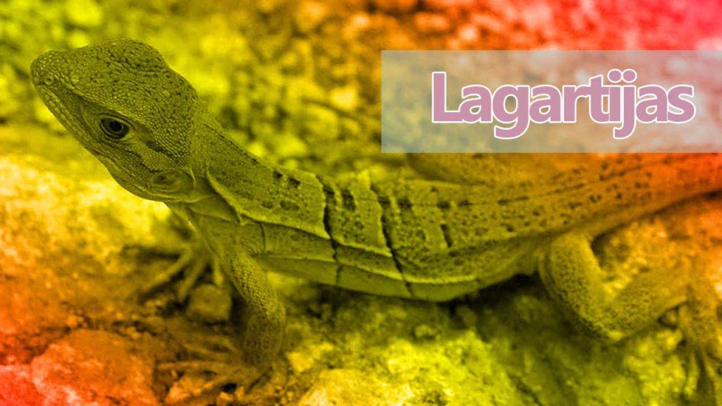 lagartijas iguanas