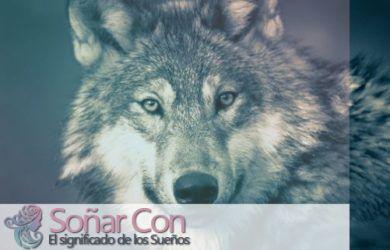 simbolismo del totem del lobo animal
