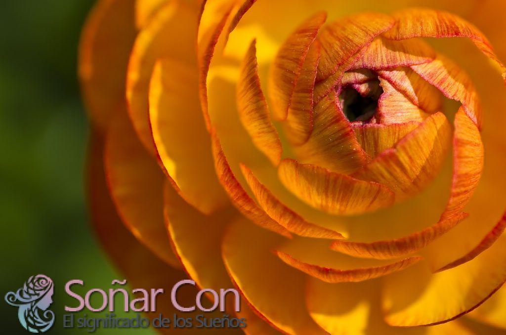 Significado del Color Naranja