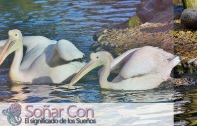 pelicano totem