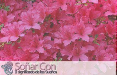 Significado de soñar con la Flor de Azalea