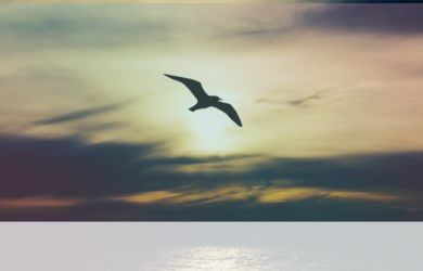 simbolismo del animal solar
