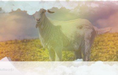 simbolismo del espiritu animal de cabra