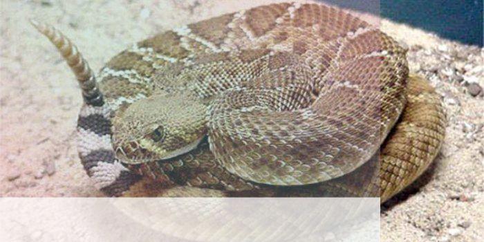 simbolismo del espiritu animal de la serpiente