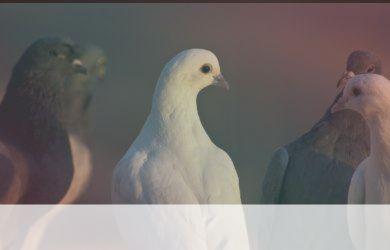 simbolismo del espiritu animal de turquia