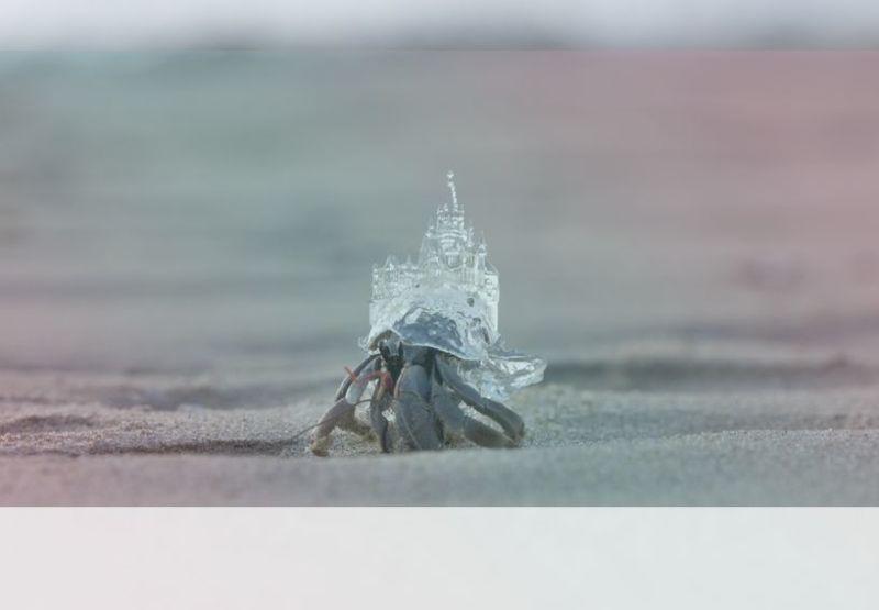 simbolismo del espiritu animal del cangrejo ermitano