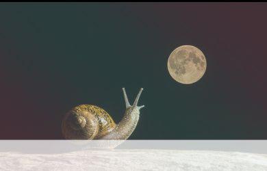 simbolismo del espiritu animal del caracol