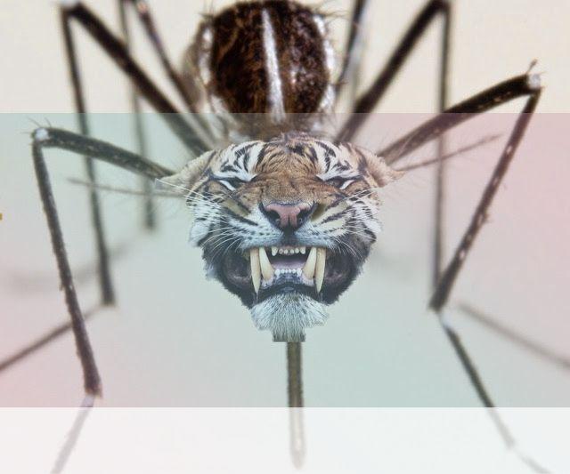 simbolismo del espiritu animal del mosquito