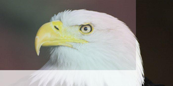 simbolismo del espiritu animal thunderbird