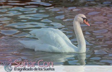 simbolismo del totem del cisne animal