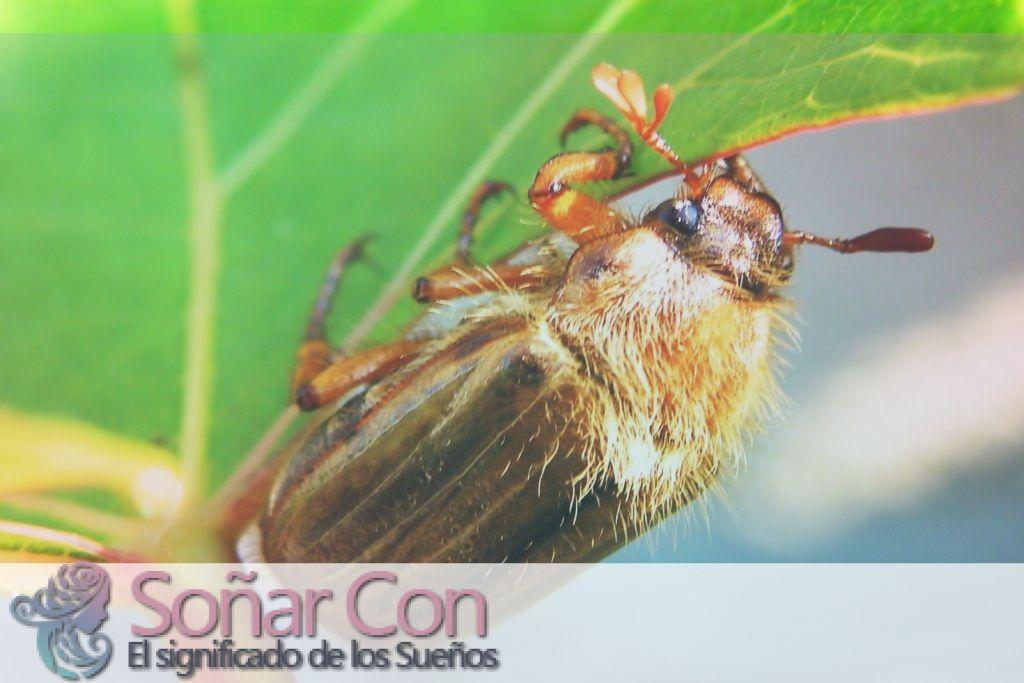 Símbolo del tótem animal abeja