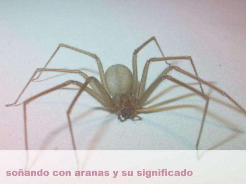 Soñar con arañas y su significado