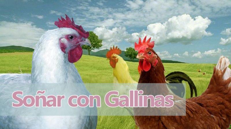 El significado de soñar con Gallinas