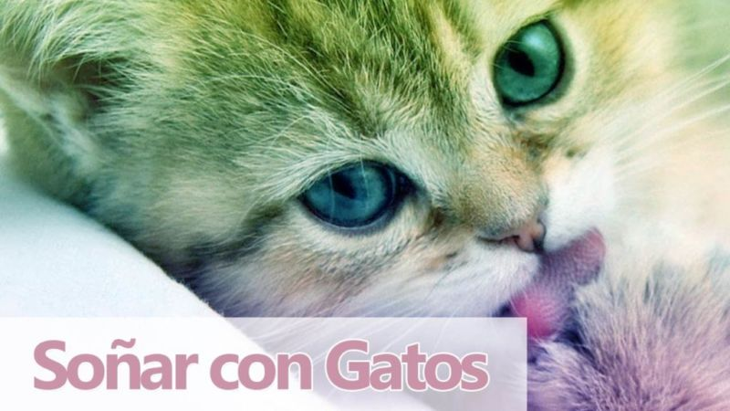 Soñando con Gatos