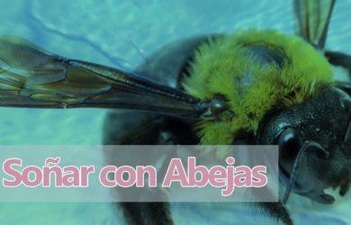 soñar abejas