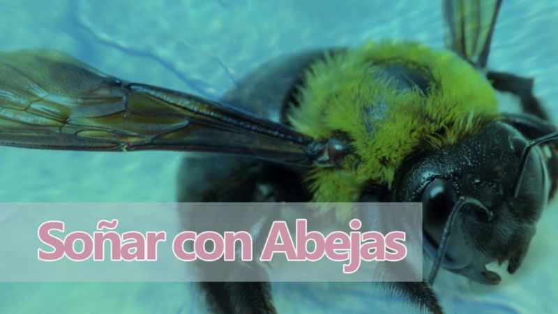 Soñar con abejas y su significado