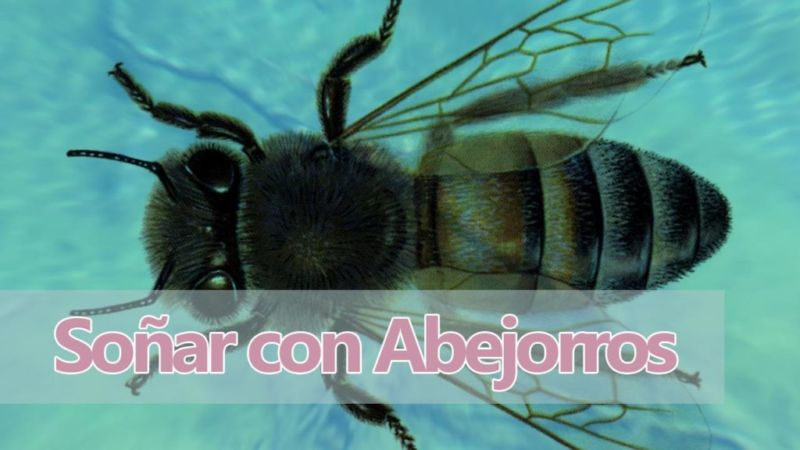 Qué significa soñar con abejorros