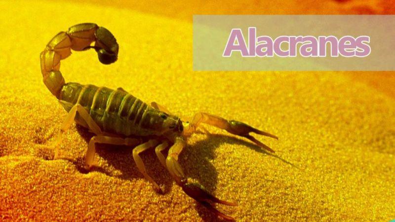 Soñar con Alacranes