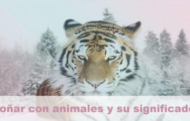 soñar con animales y su significado