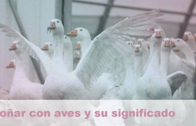 soñar con aves y su significado