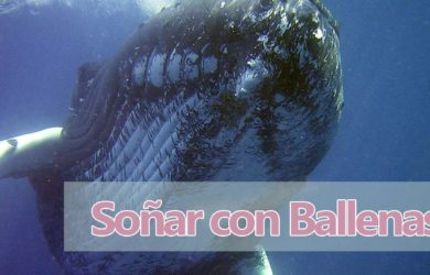 soñar con ballenas