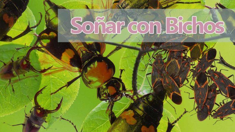 Significado de soñar con Bichos e Insectos