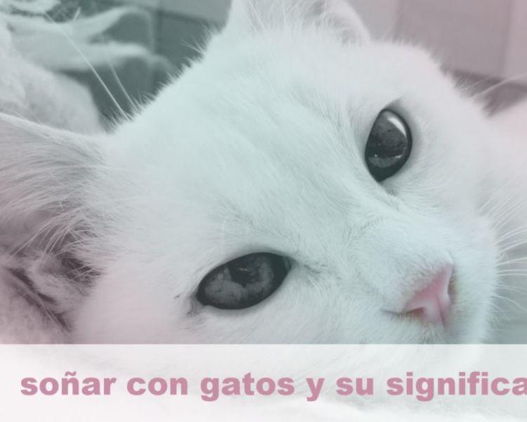 Soñar con Gatos - Qué significa