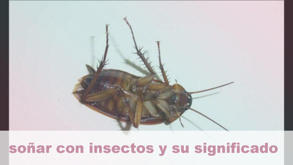 Tótem animal de insectos Significado y simbolismo