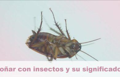 soñar con insectos y su significado