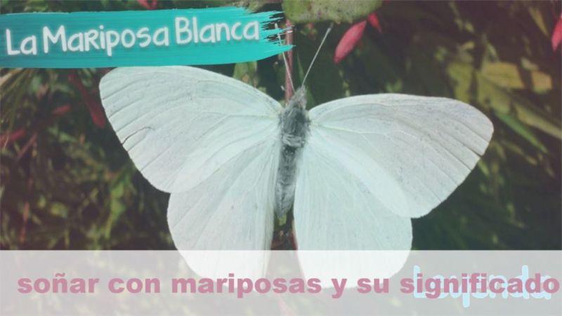 Soñar con Mariposas. Conoce su significado y simbolismo
