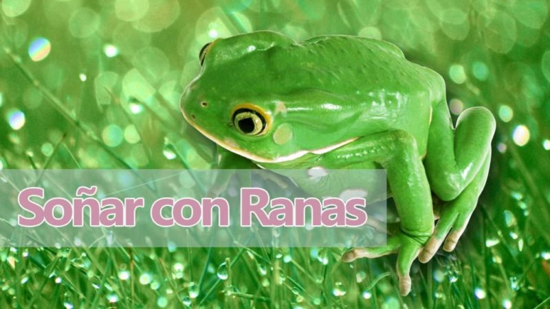 Significado de Soñar con ranas