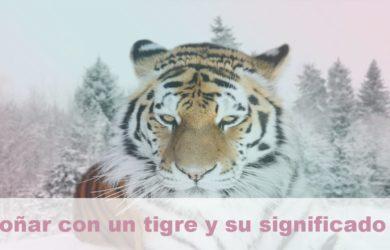 soñar con un tigre y su significado