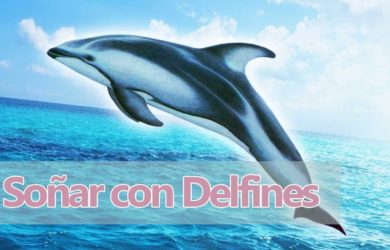 soñar delfines