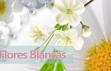 soñar flores blancas