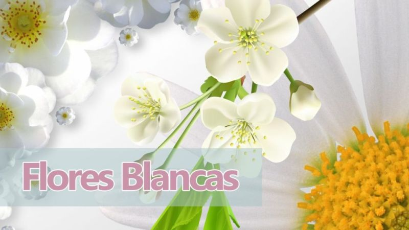 Soñar con Flores Blancas y su significado