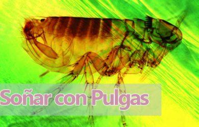 soñar pulgas