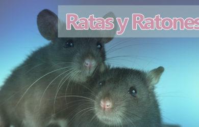 soñar ratas