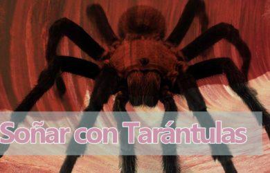 soñar tarantulas