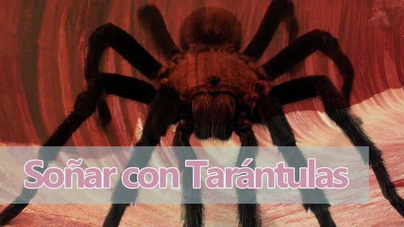 Significado de Soñar con Tarántulas