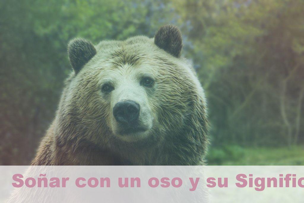 Soñar con un oso y su Significado