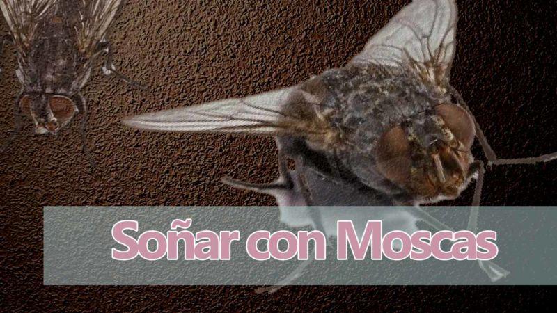 Soñar con moscas y mosquitos