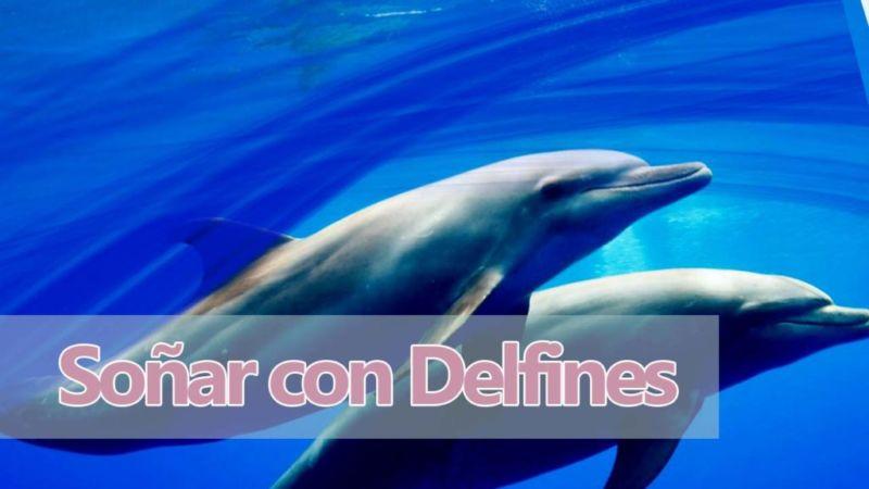 Significado de los sueños con delfines