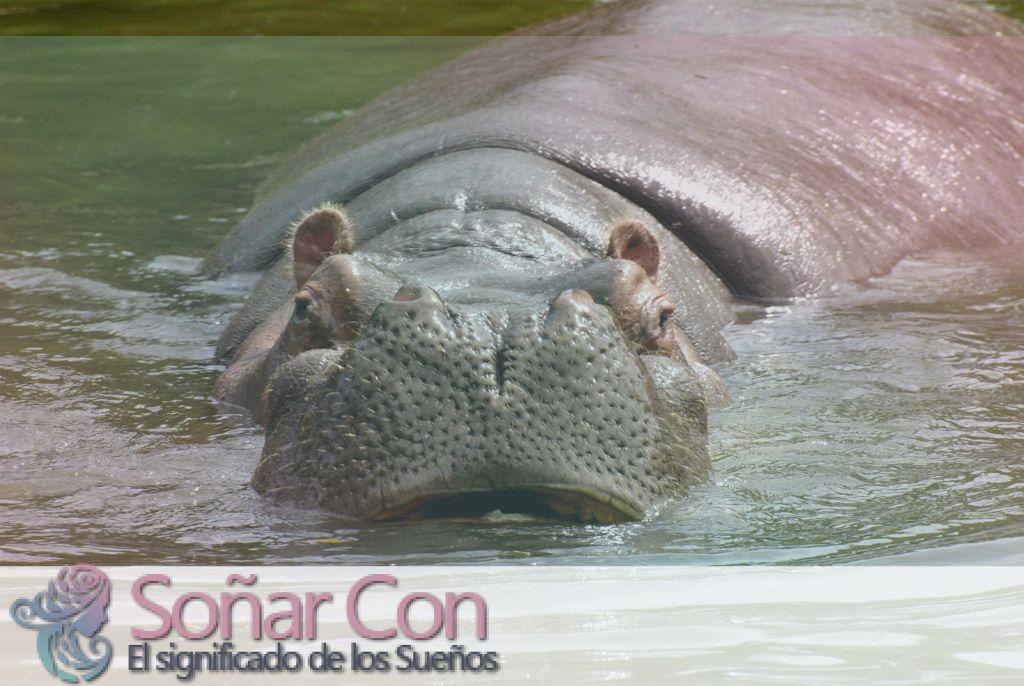 Tótem Animal Hipopótamo