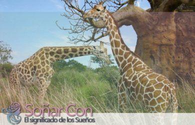 totem de la jirafa el verdadero significado