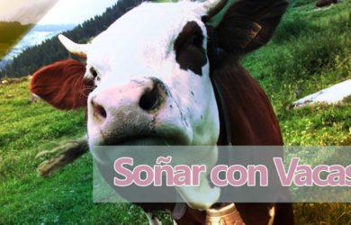Tótem Animal de la Vaca