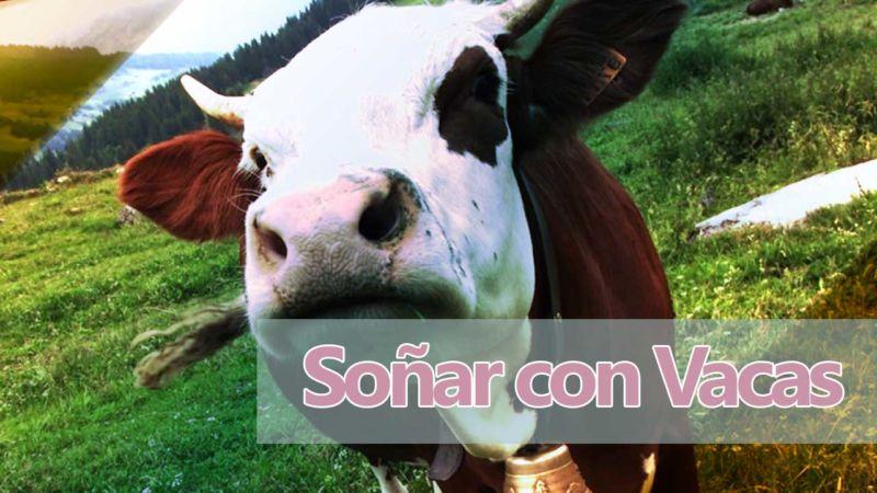 Sueños con vacas y terneros